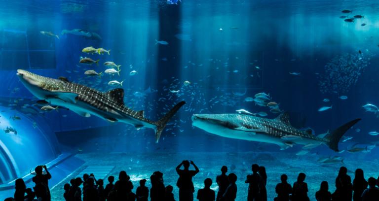 沖縄の水族館